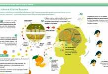El-sistema-olfativo-humano