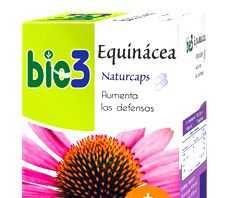 bie3_equinacea.jpg