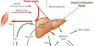 Dietas-desequilibradas-producen-cetosis