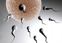fertilidad1