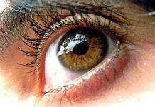ojos-cerebro